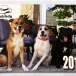 Calendars have become a major fundraiser for Hill County Paw Pals